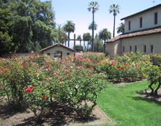 Rose gardens on the university grounds at the site of the original mission.